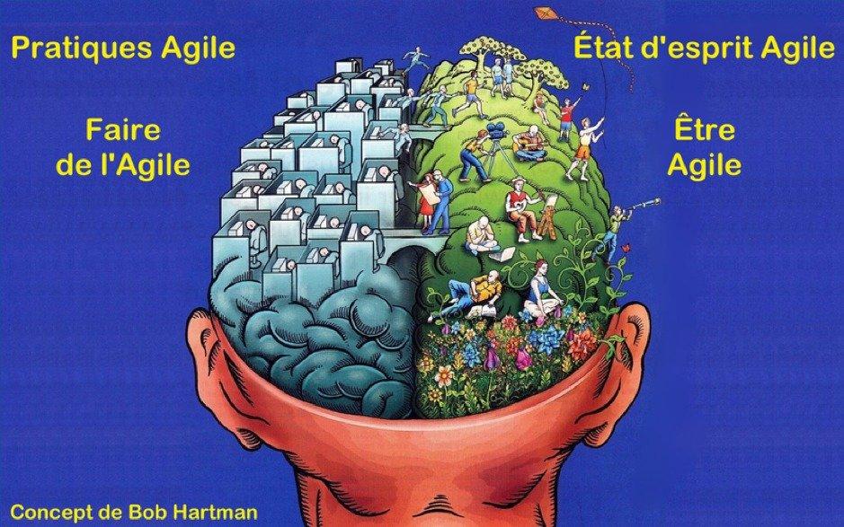 Vision schématisée de l'agilité